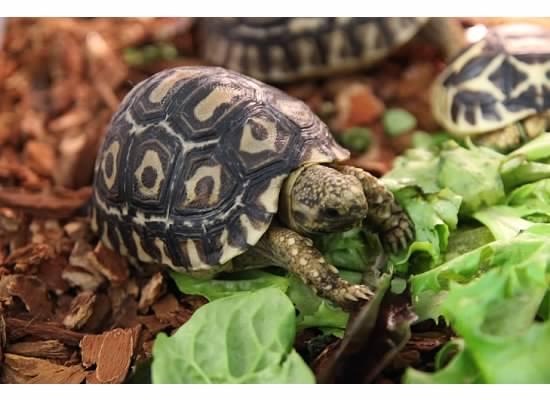 The Best Pet Tortoises