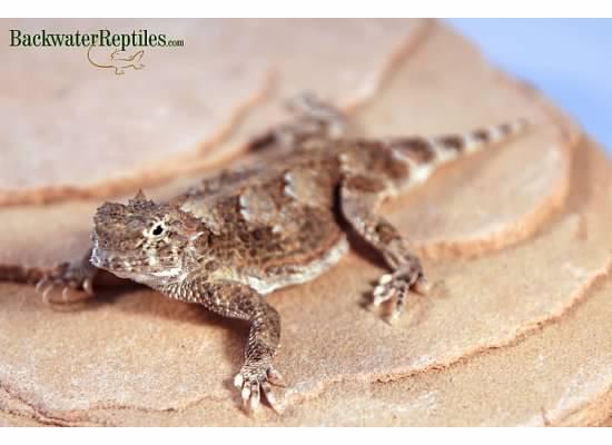 Weirdest Reptile Adaptations and Behaviors