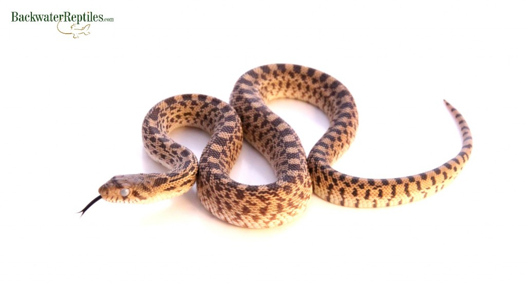 Is My Pet Snake Going To Shed Its Skin